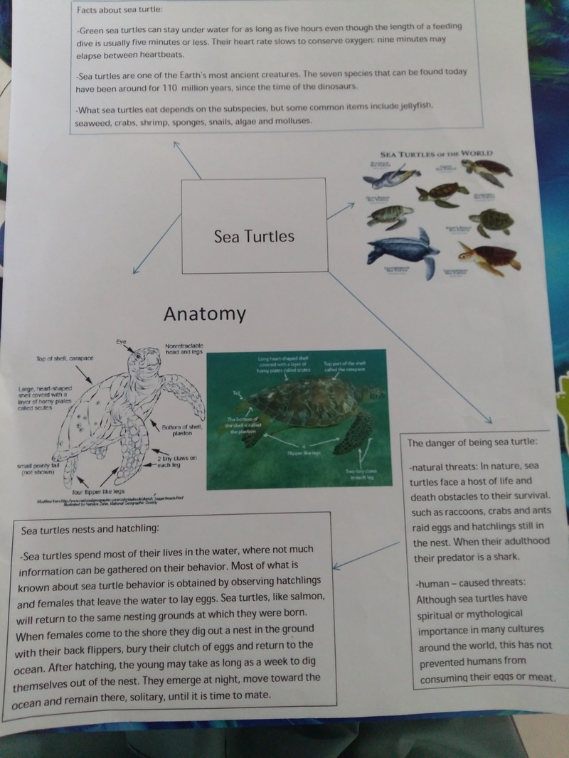 Sea Turtles - Grade 5 Exhibition